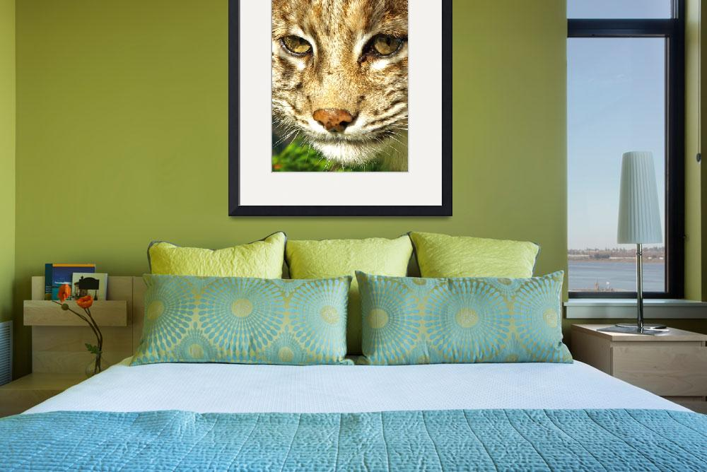 """Bobcat Portrait&quot  (2007) by loversdream"