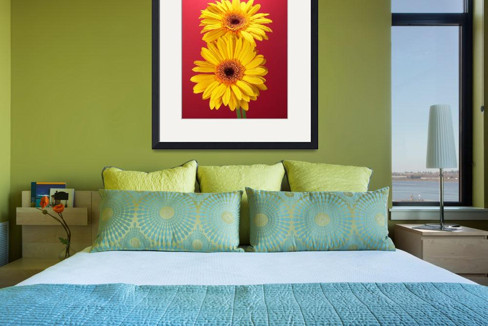 """Yellow Gerbera Daisies Superb&quot  (2006) by Infomages"