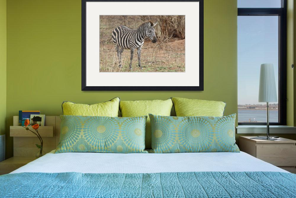 """Zebra in Natural Setting&quot  by patgleasonphotography"