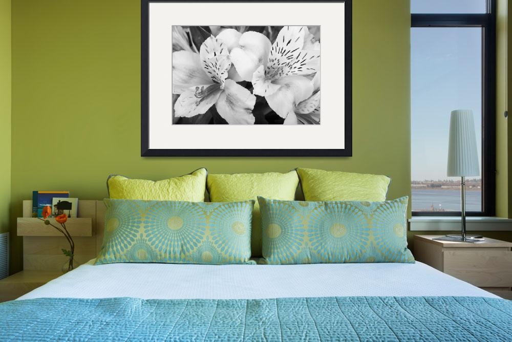 """Peruvian Lilies  Flowers Black and White Print&quot  (2011) by lightningman"