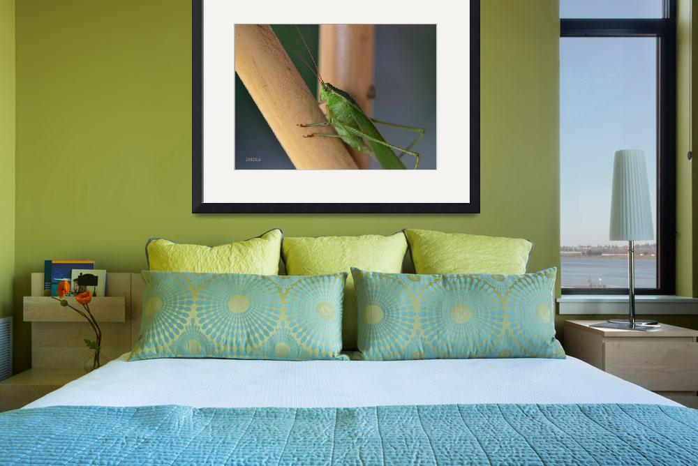 """Katydid Resting on Bamboo&quot  (2012) by theblueplanet"
