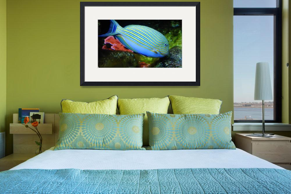 """Striped Tropical Parrot Fish&quot  by AnimalsbyDiDi"