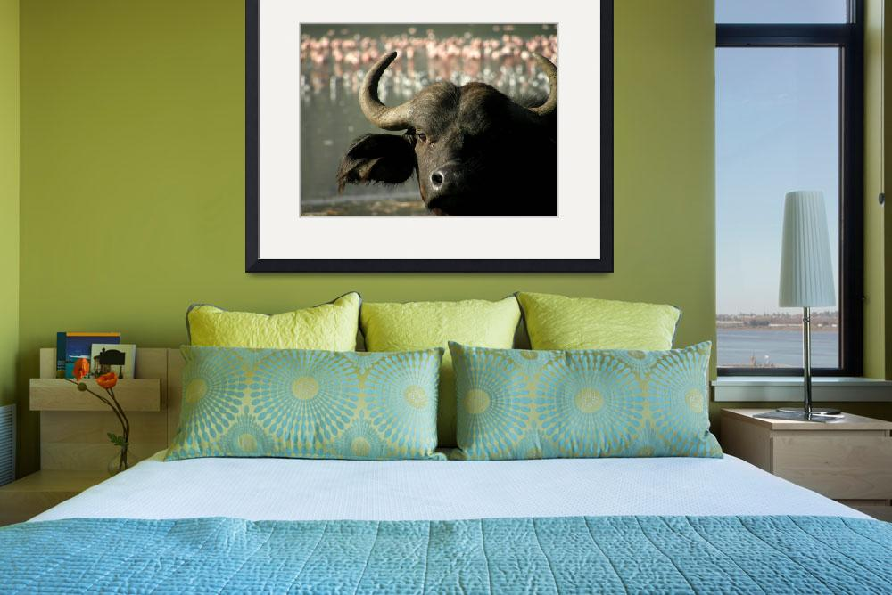 """Cape Buffalo in Nakuru&quot  (2010) by JamesBWells"