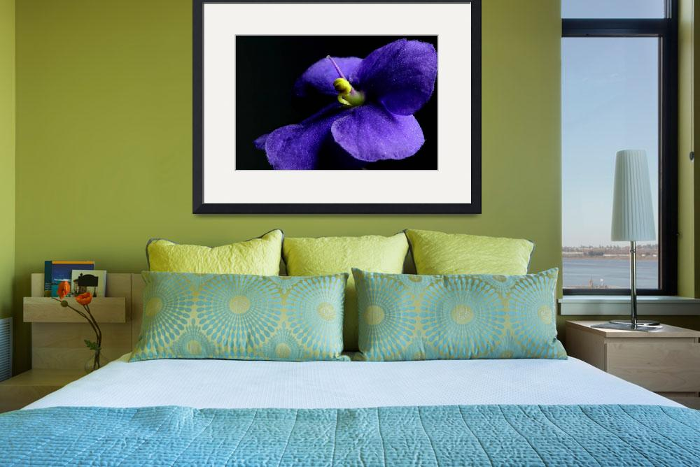 """African Violet&quot  by Photo-Writer"
