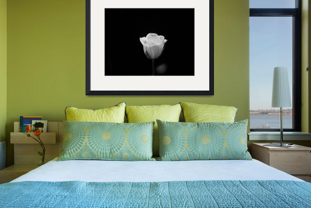 """Pure White Rose 341&quot  (2011) by photographybydonna"