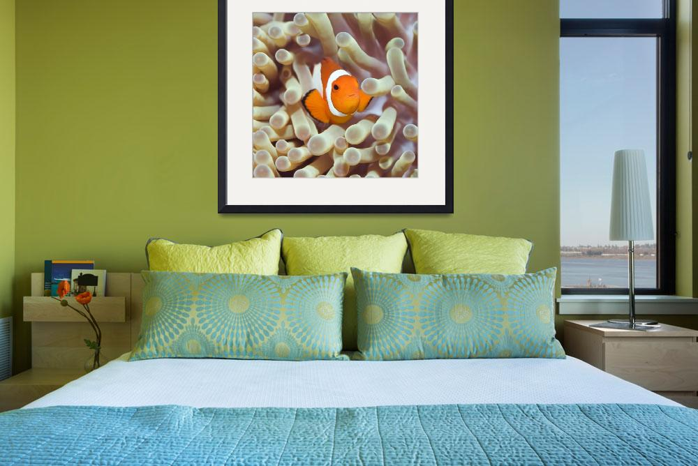 """Tropical fish Clownfish&quot  by MotHaiBaPhoto"