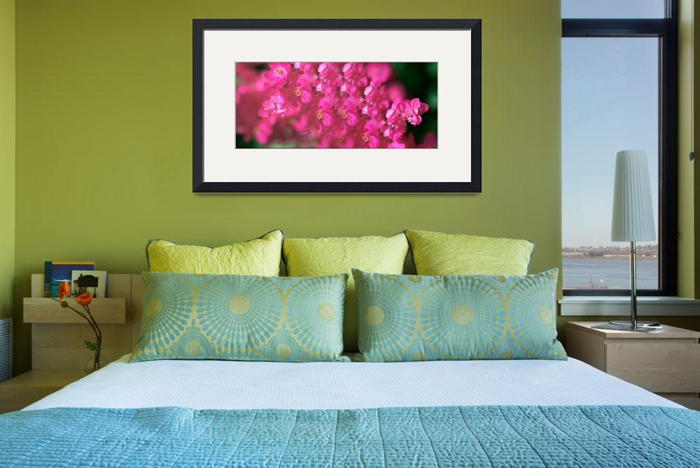 """Bougainvillea Flower&quot  (2014) by myworldtravelimage"