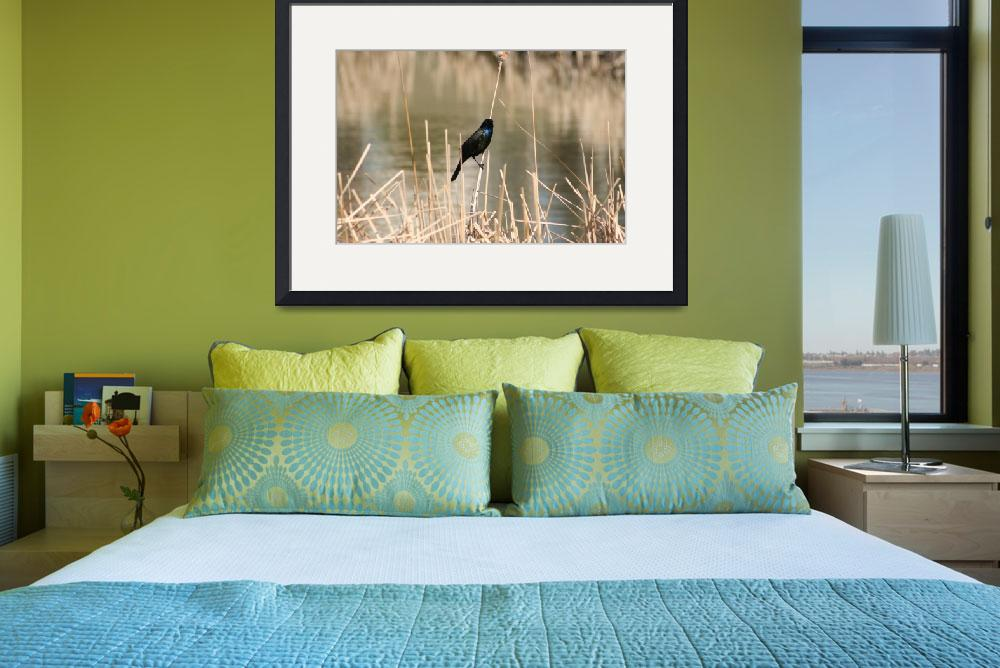 """Common Grackle on Marsh Grass&quot  (2012) by rhamm"