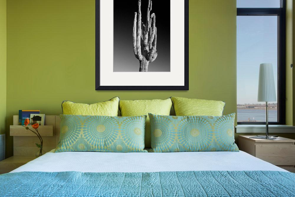 """Giant Saguaro Cactus Portrait Black and White&quot  (2011) by lightningman"