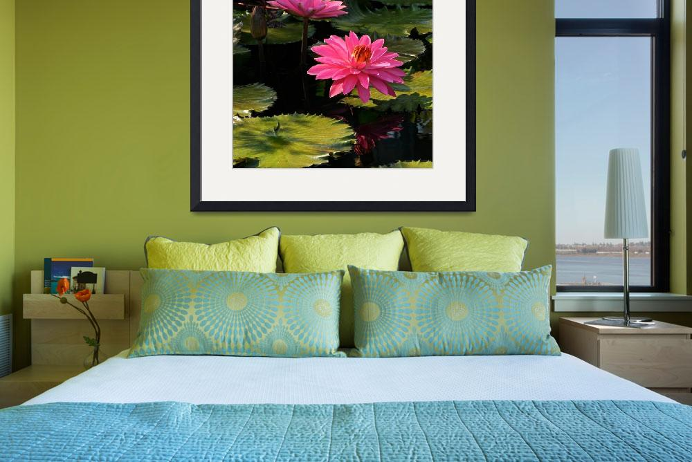 """Pink Tropical Water Lilies&quot  (2013) by LightHeart"