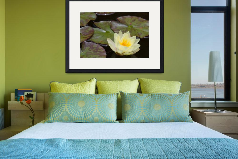 """Water Lilly 2&quot  (2009) by GuyWood"