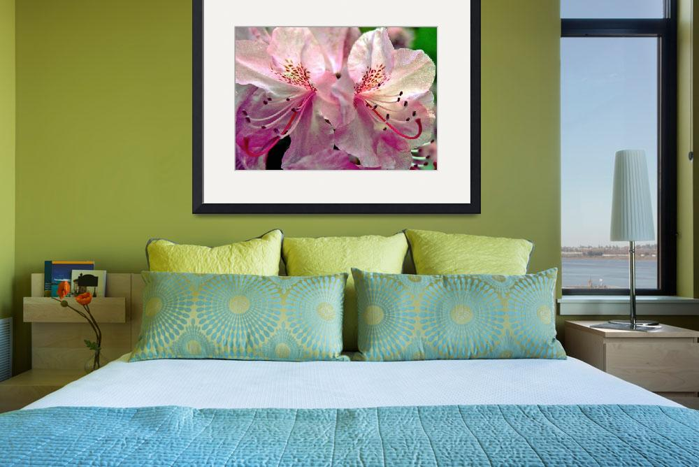"""Pink Rhododendron Blossoms&quot  (2011) by bavosiphotoart"
