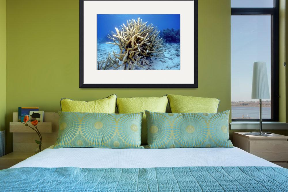 """Staghorn Coral&quot  (1995) by JoaoPonces"