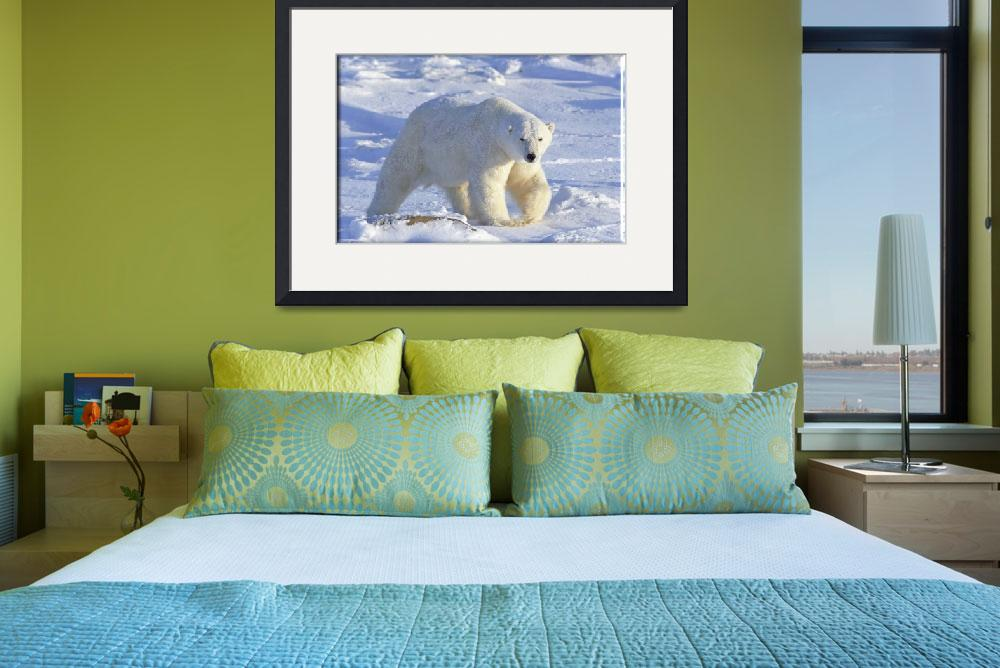 """POLAR BEAR 1&quot  (2009) by cabinfeverdavid"