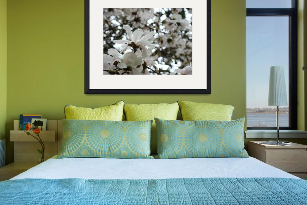 """Magnolia Flowers White Magnolia Tree Flower Art&quot  (2009) by BasleeTroutman"