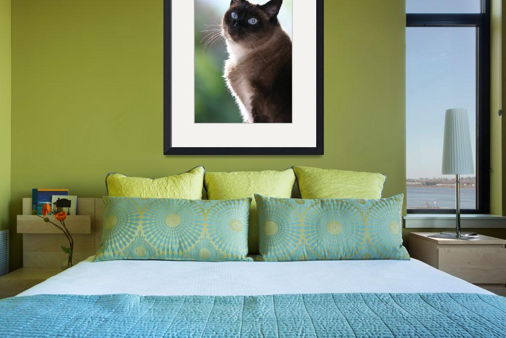 """""Applehead"" Siamese Cat&quot  by redR"