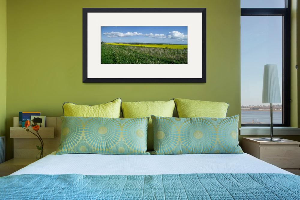 """Rape Seed Fields Panorama&quot  (2009) by ajkcat"