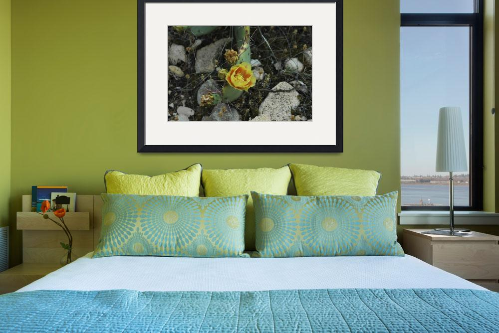 """Yellow Cactus Flower&quot  (2005) by cthoward"