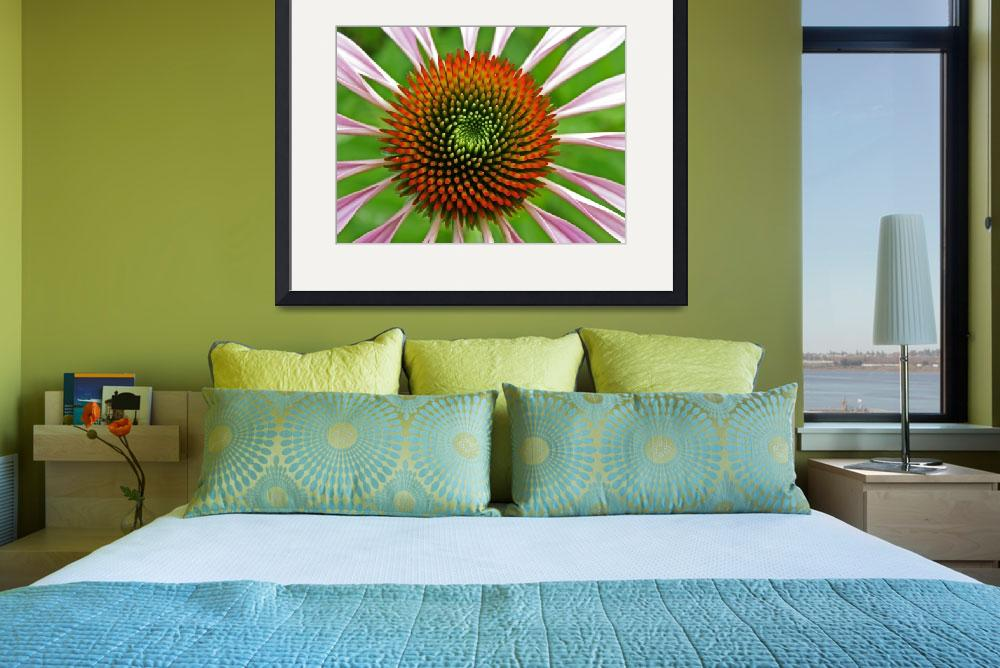 """Cone flower&quot  (2009) by newtstew"