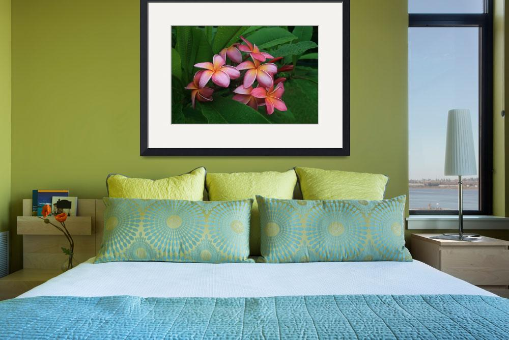 """Melia hae Hawaii Tropical Plumeria Keanae&quot  (2009) by sharonmau"
