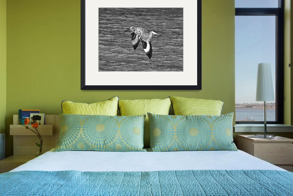 """Willet in Flight&quot  (2010) by shelshots"