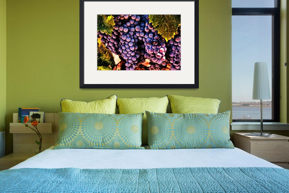"""Wine Grapes&quot  (2009) by BarbaraBrownPhotography"