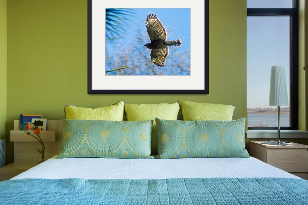 """Red Shouldered Hawk Bird Flying&quot  (2004) by kphotos"