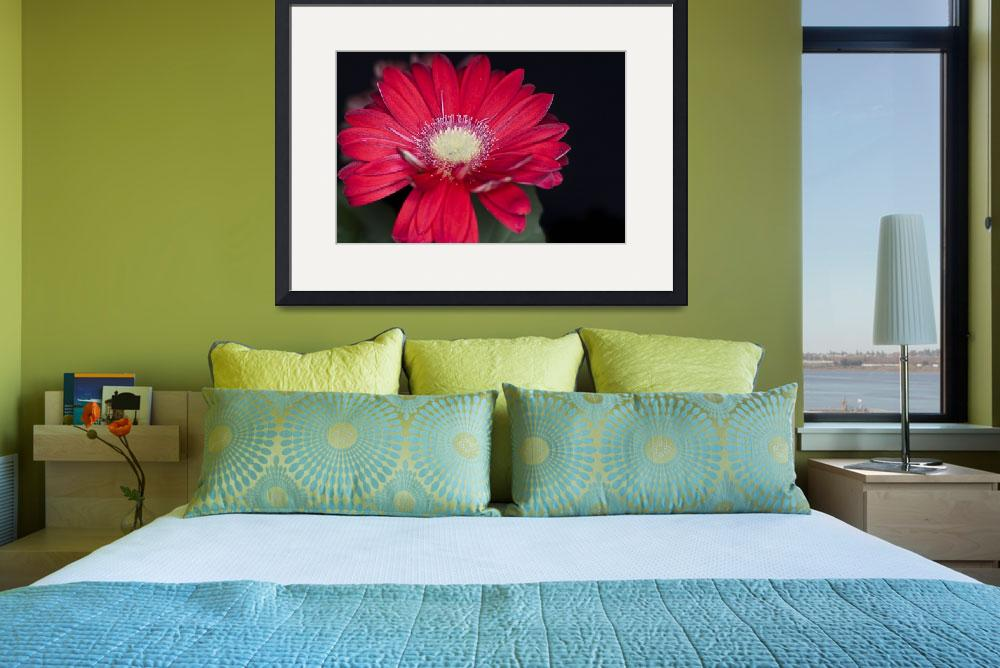 """Red Gerbera&quot  by StevePurnell"