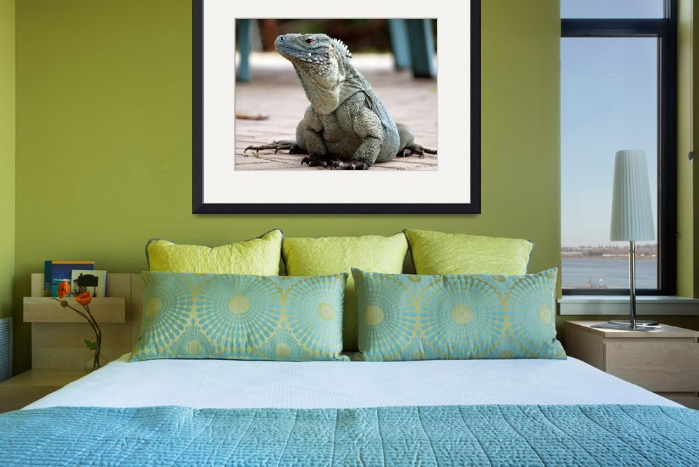 """Cayman Islands Endangered Blue Iguana&quot  (2011) by JBrooker"