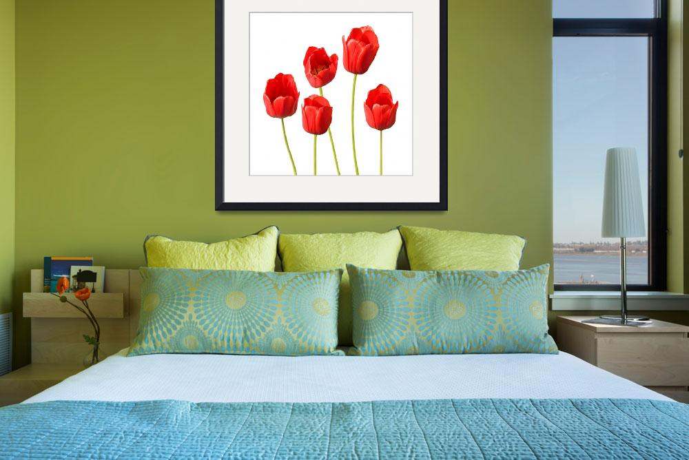 """Red Tulips White Background Wall Art&quot  (2012) by NatalieKinnear"