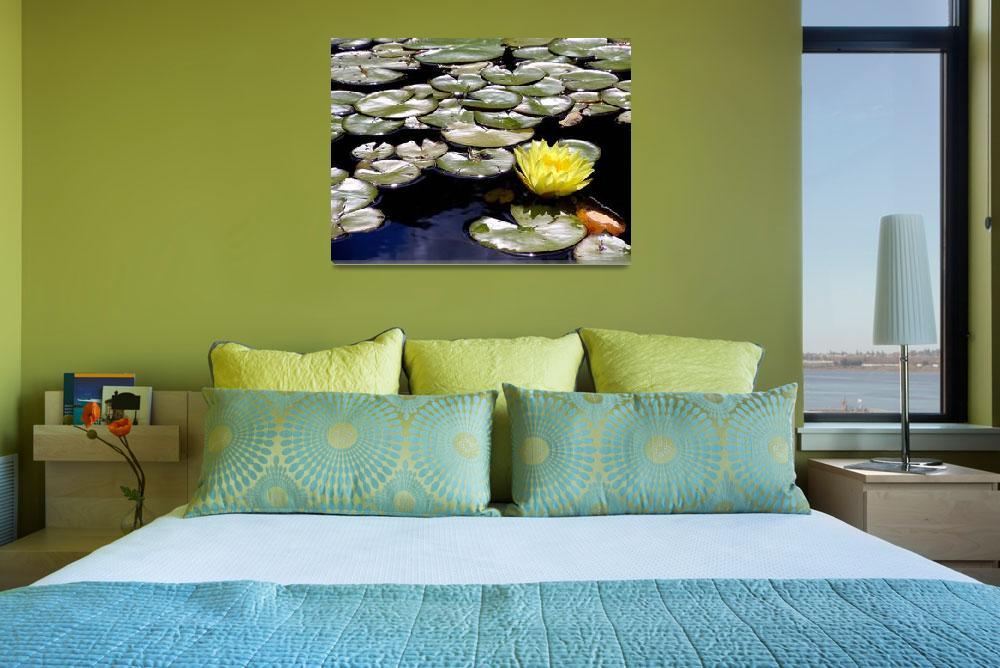 """Yellow Water Lily 1&quot  (2012) by ShaneWells"