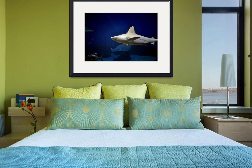 """Grey Reef Shark&quot  (2010) by PaulCoco"