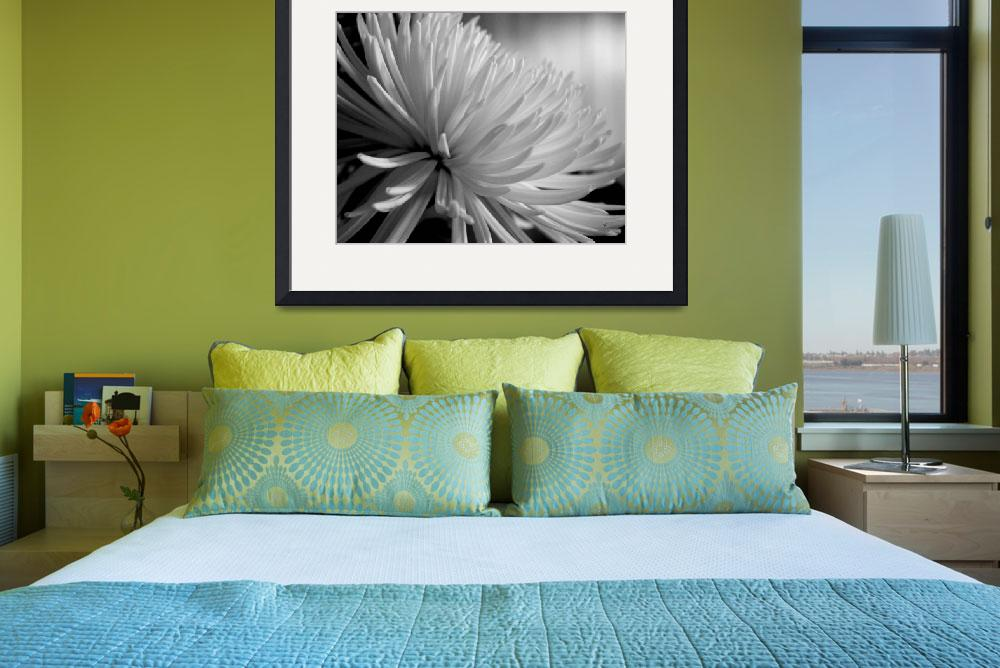 """Chrysanthemum In Black And White&quot  (2015) by bettynorthcutt"