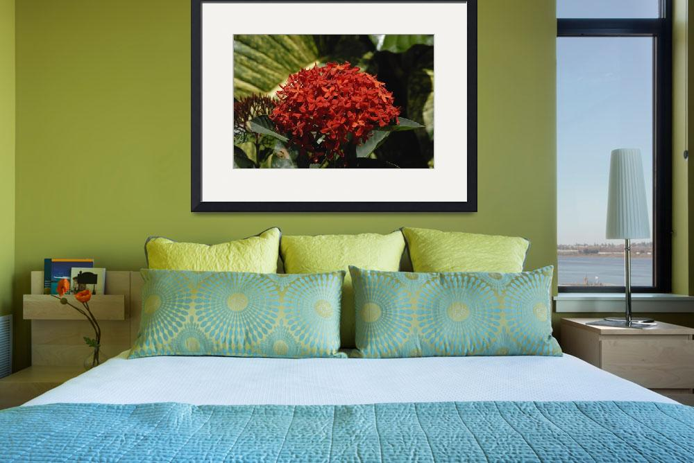 """Cayman Islands Plant Life: Red Ixora&quot  by RonScott"