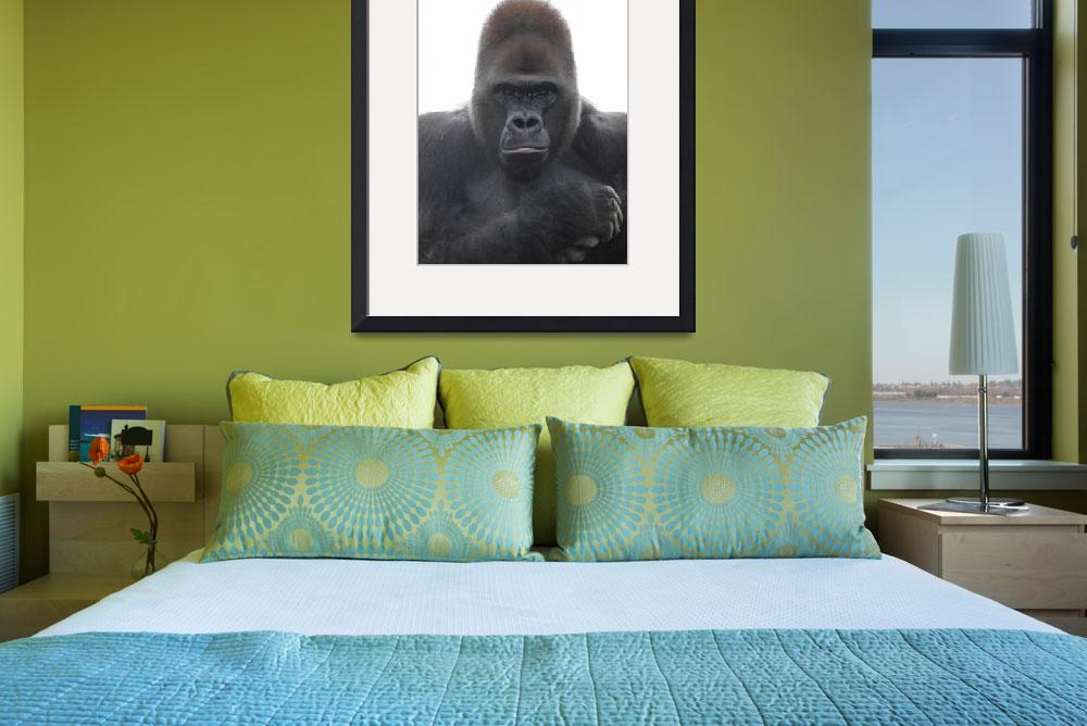 """Gorilla Western Lowland 000_002&quot  (2012) by beautifulprints"