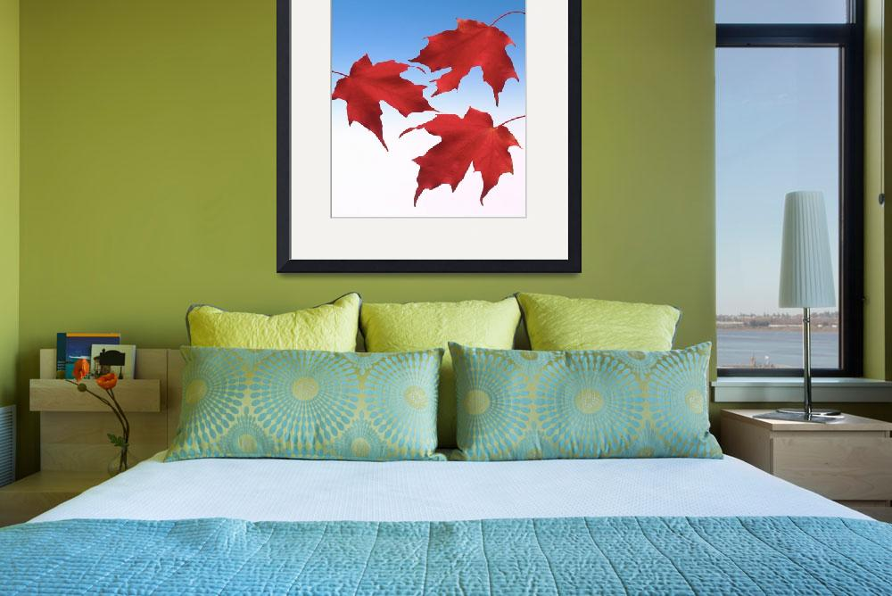 """Three maple leaves.Three red maple leaves with blu&quot  by Morganhowarth"