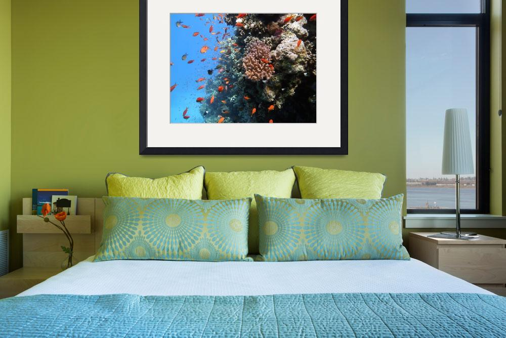 """coral with anthias fish&quot  by PhotographyByPixie"
