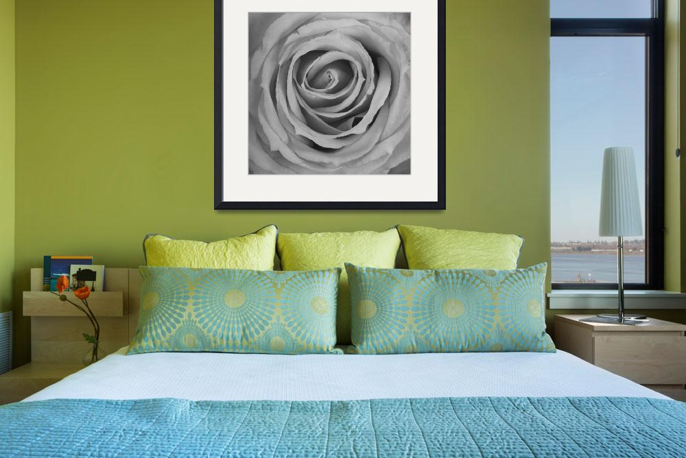 """Black and White Spiral Rose Petals&quot  (2012) by lightningman"