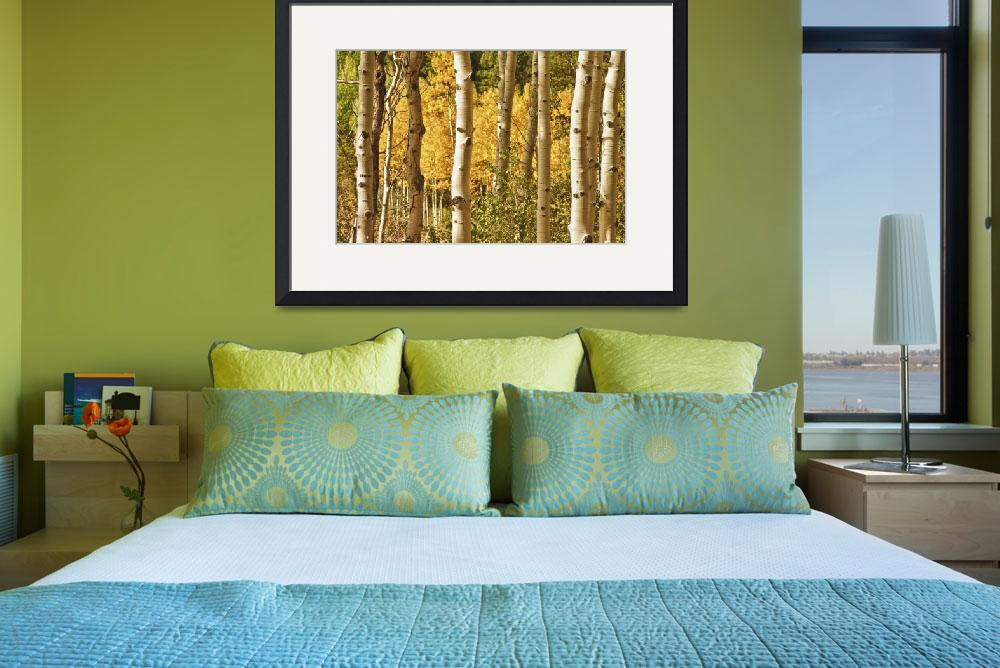 """Aspen Gold Landscape&quot  (2011) by lightningman"