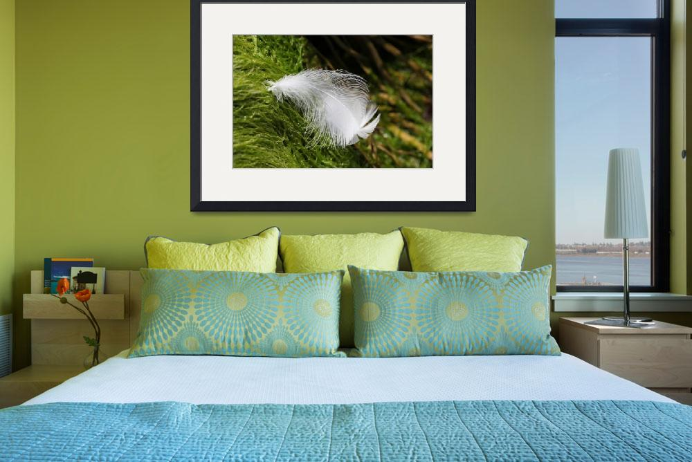 """White Feather & Sea Grass IMG_4947 copy&quot  (2012) by jeffgriffin"