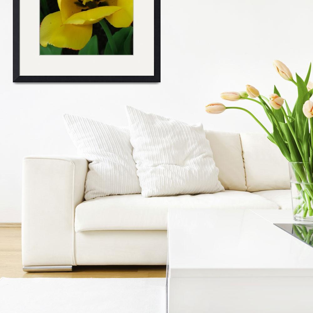 """Yellow Tulip&quot  (2007) by DonnaCorless"