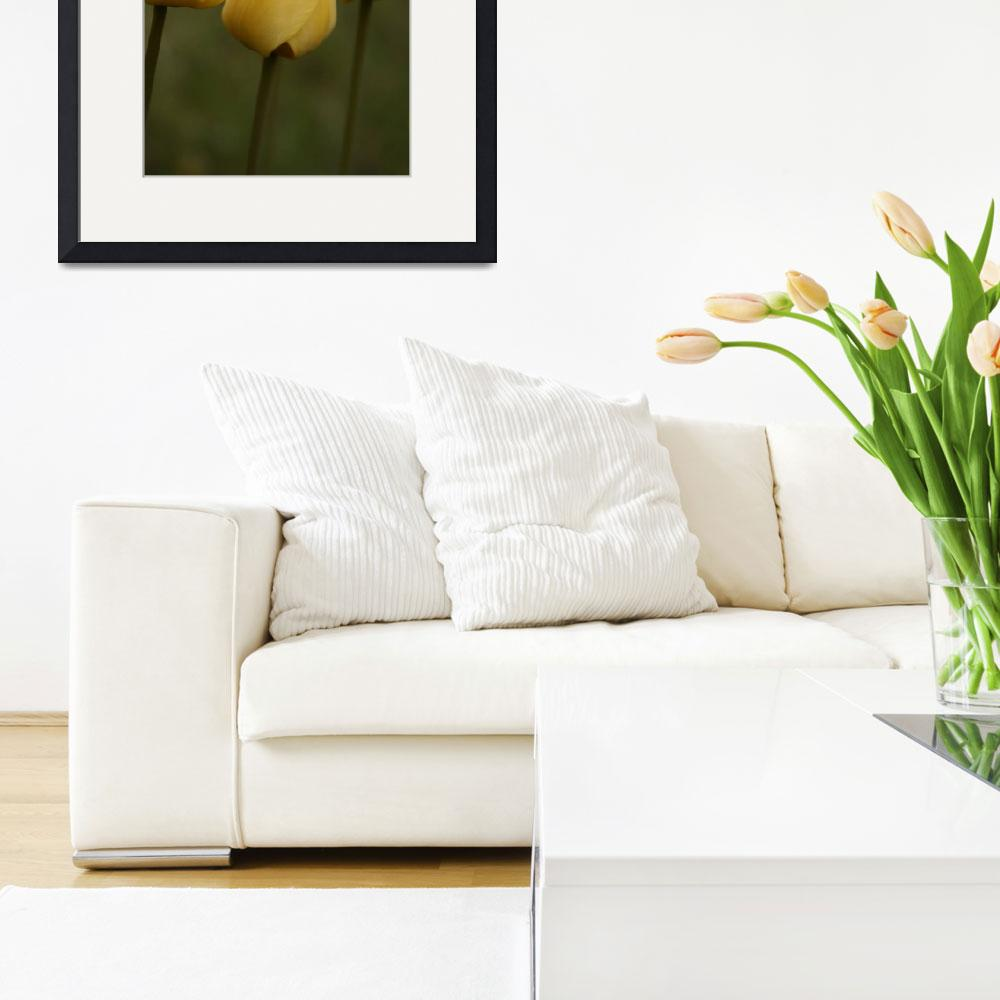 """Three Yellow Tulips&quot  (2010) by thegardenpathphotography"