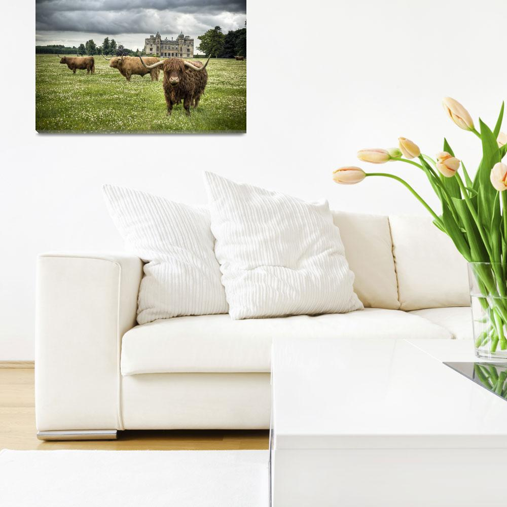 """Highland Cattle, Charlton Park House&quot  (2008) by shortwork"