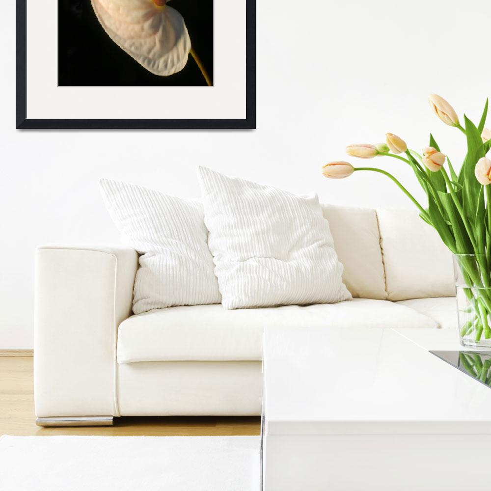 """Elegant White Anthurium&quot  (2014) by newimage"