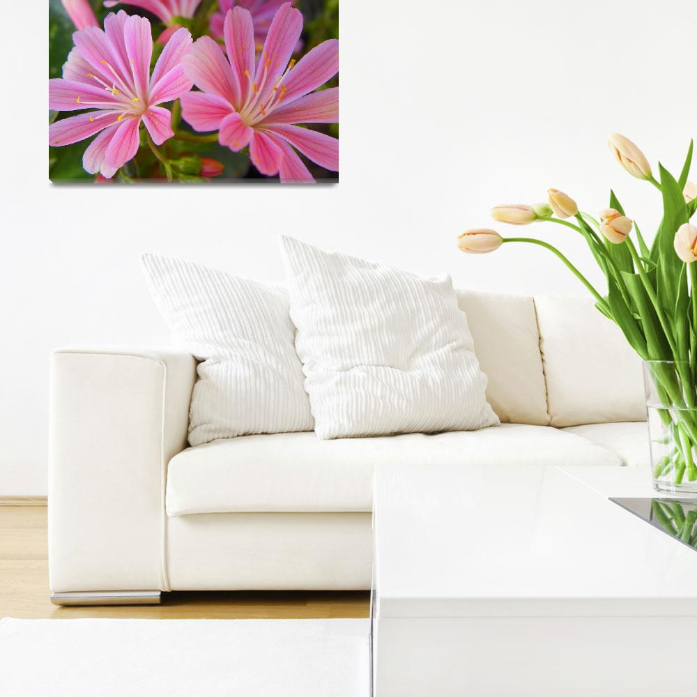 """Floral - Lewisia Cotyledon - Garden Flower&quot  by artsandi"