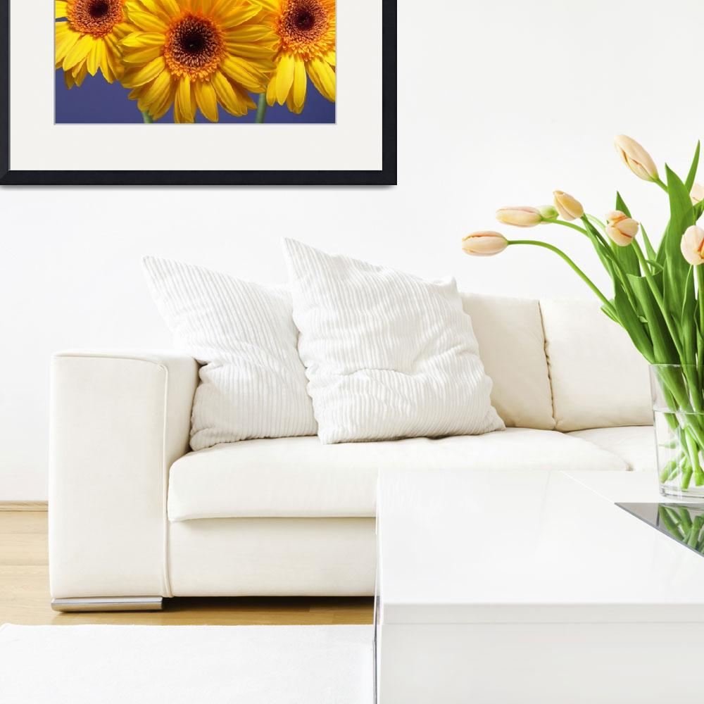 """Yellow Gerbera Daisies Buddy On Blue&quot  by Infomages"
