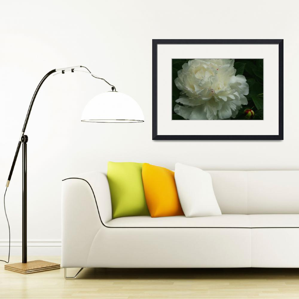 """White Peony on a Rainy Day&quot  (2012) by newimage"
