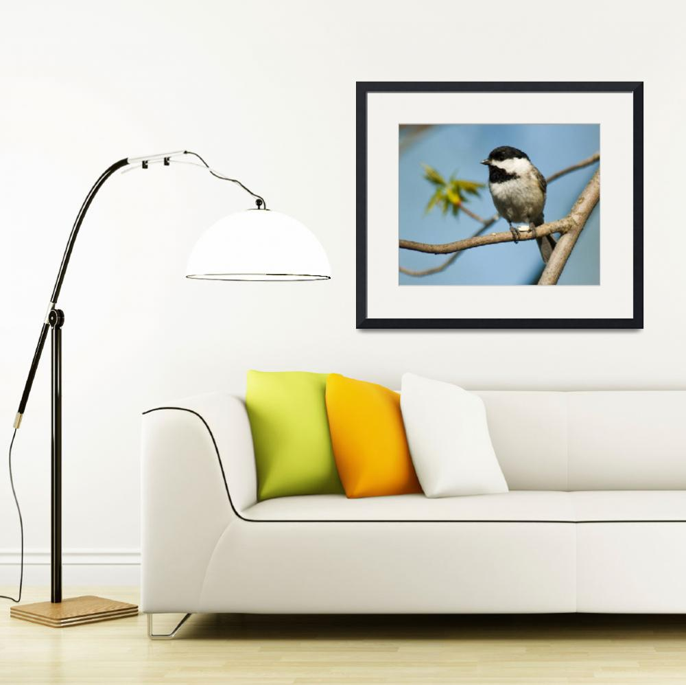 """Carolina Chickadee&quot  (2009) by tricia"