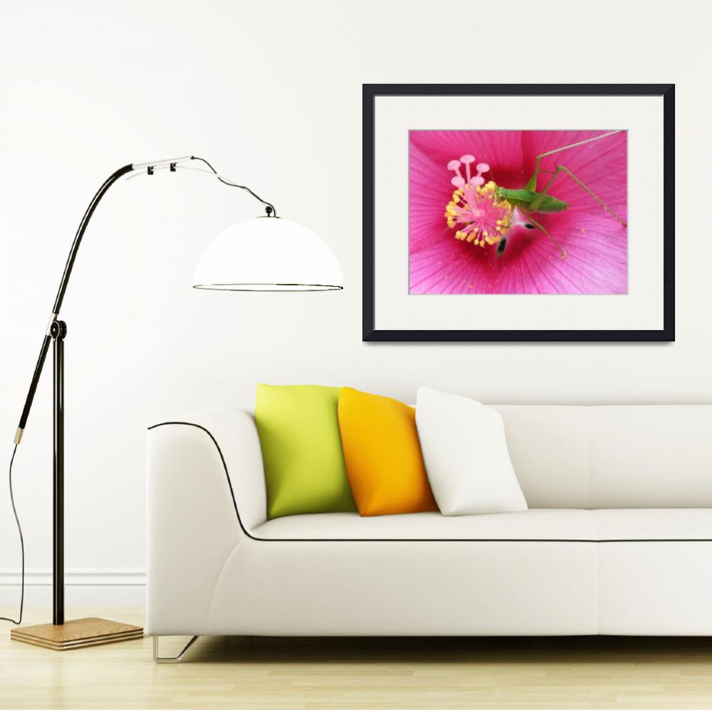 """Katydid on Pink Hibiscus Flower&quot  (2008) by VickisNature"