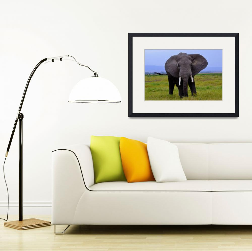 """Elephant in the Wild&quot  (2012) by pravine"